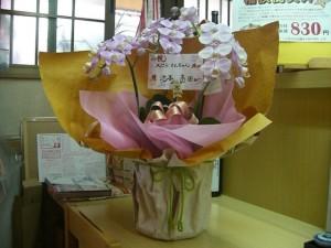 祝い花をいただきました