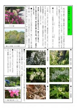 大高緑地の自然(5月号)